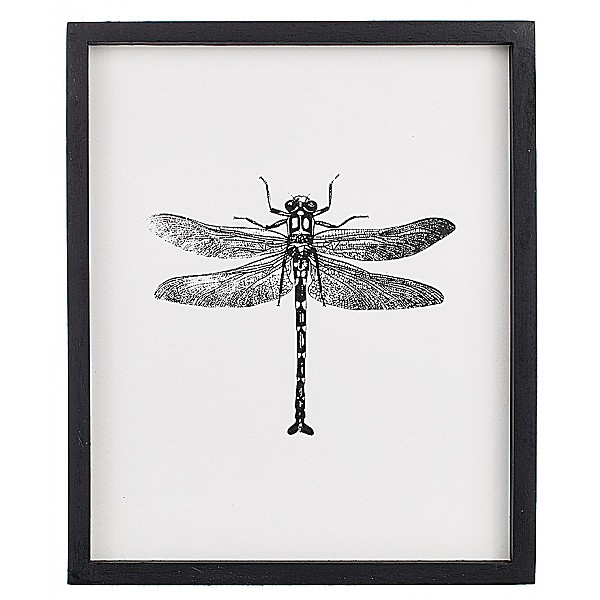 Picture Insect Dragonfly 2 - 25 x 30 cm