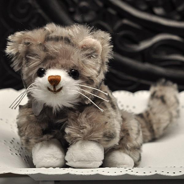 Katt Lilla Maciek - Brun nos
