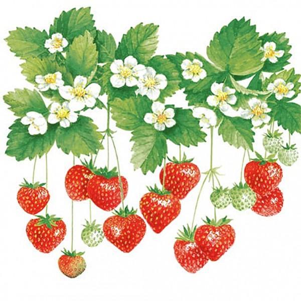 Servetter Summer Fruits