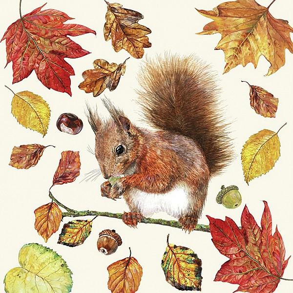 Napkins Eating Squirrel