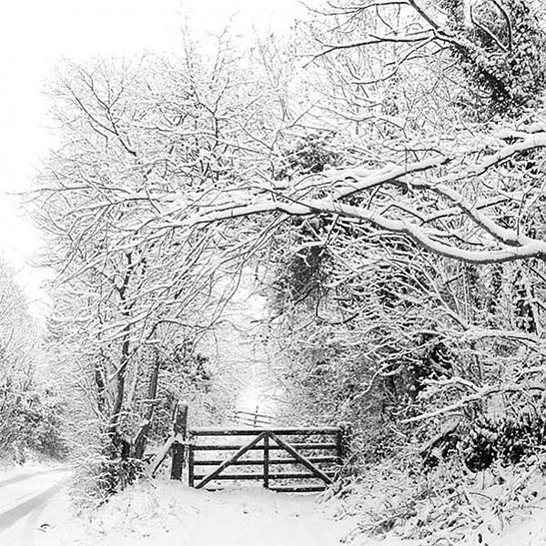 Servetter Winter Landscape