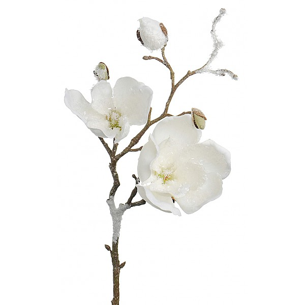 Magnolia med is Vit - 50 cm