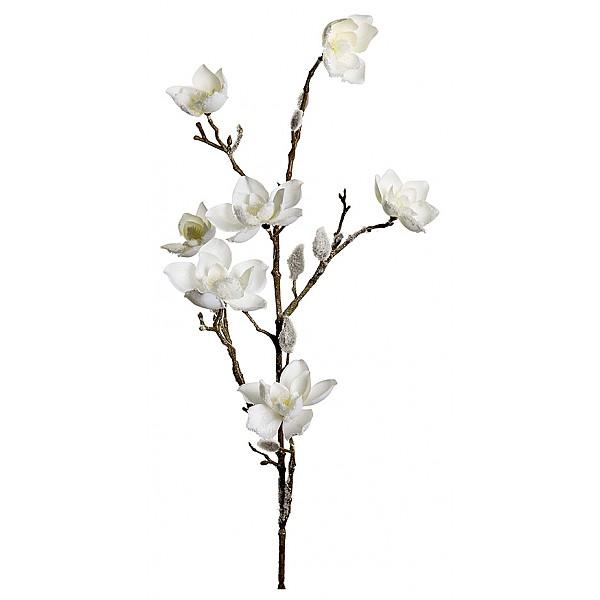 Magnolia med snö Vit - 85 cm