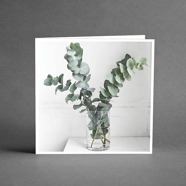 Kort Eucalyptus