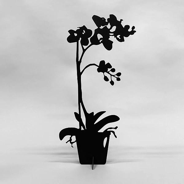 Orkidé Eternity - Svart