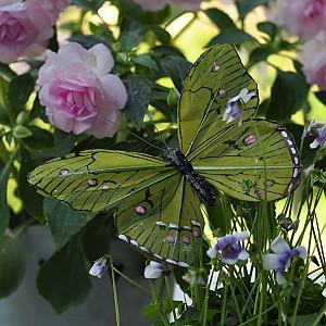Butterfly Stick Oriental