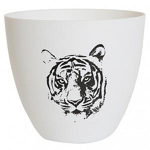 Ljuskopp Tiger
