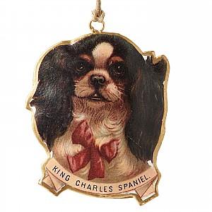 Hund King Charles Spaniel