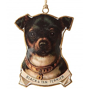 Dog Black & Tan Terrier