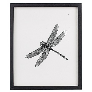 Picture Insect Dragonfly