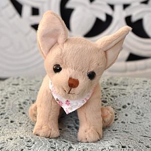 Hund Chihuahua Baby Dennis