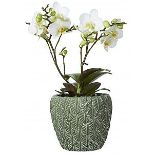 Flower Pot Nova