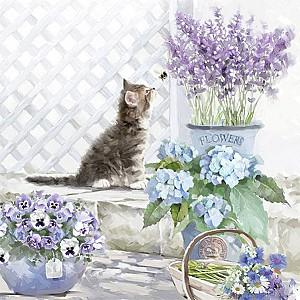 Napkins Kitten