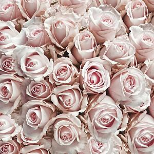 Servetter Pastel Roses