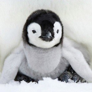 Servetter Baby Penguin