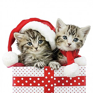 Servetter Christmas Kitten