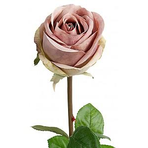 Rose 75 cm