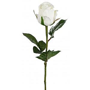 Rose 50 cm