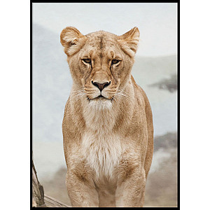 Lion Female Poster