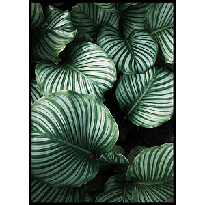 Big green striped leaves Poster