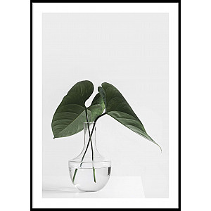 Green leaves in vase Poster