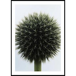 Poster Flower Ball