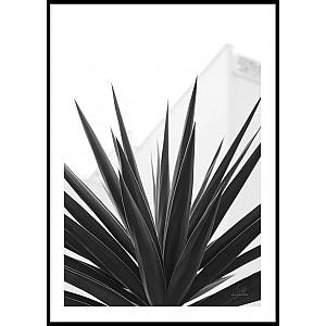 Poster Plant Texture Spain