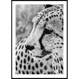 Poster Geopard Portrait