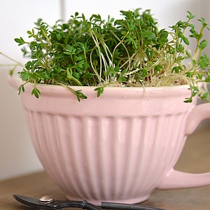 Mixing Bowl Mynte Mini - English Rose - Pink