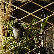 Trellises & Plant Supports